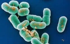 باکتری لیستریا