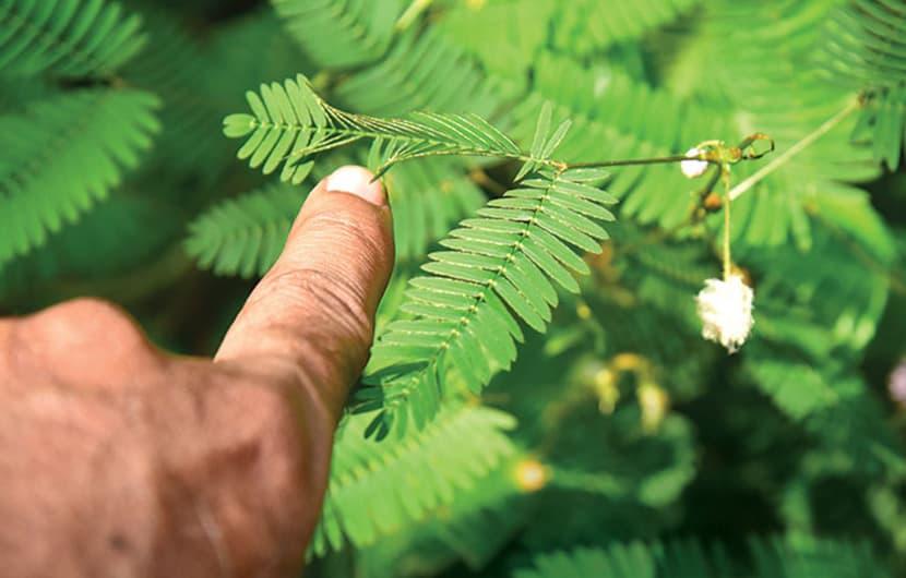 نبوغ گیاهان و چیزهایی که میتوانیم از این موجودات زنده بیاموزیم