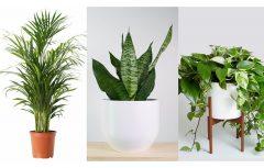 بهترین گیاهان آپارتمانی برای نگهداری در خانههای کوچک