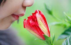 دانشمندان ارتباطی معنادار بین حس بویایی و حس جهت یابی کشف کردند