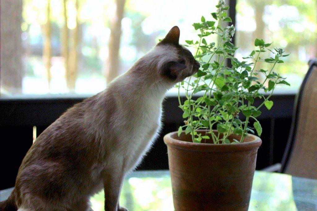 ده گیاه خانگی که برای حیوانات خانگی شما هیچ خطری ندارند