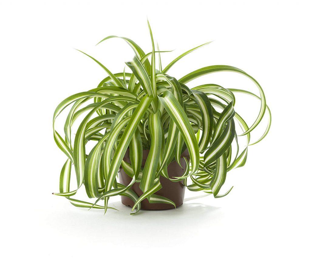 ده گیاه خانگی