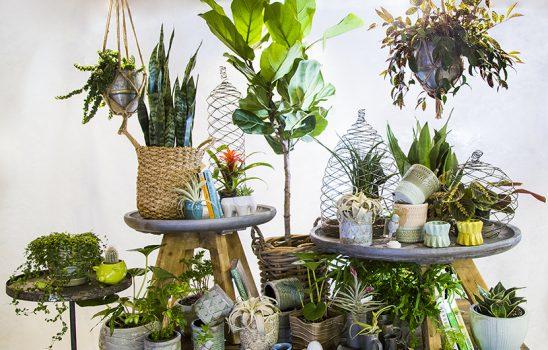 پنج نوع گیاه آپارتمانی که باید در هر منزلی وجود داشته باشند