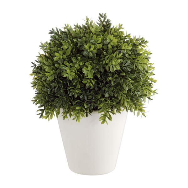 پنج نوع گیاه آپارتمانی