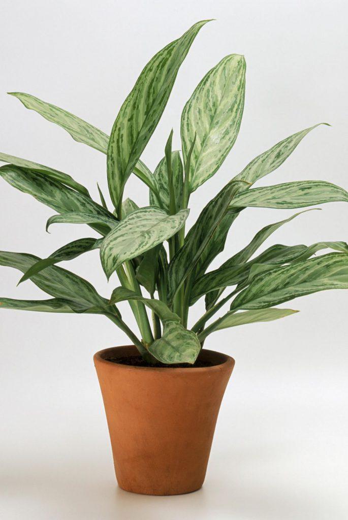گیاهان بادوام در نور کم