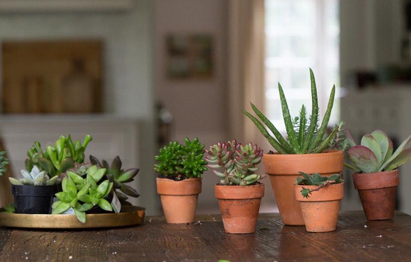 بهترین گیاهان گلدانی برای نگهداری در محیط کار و اداره
