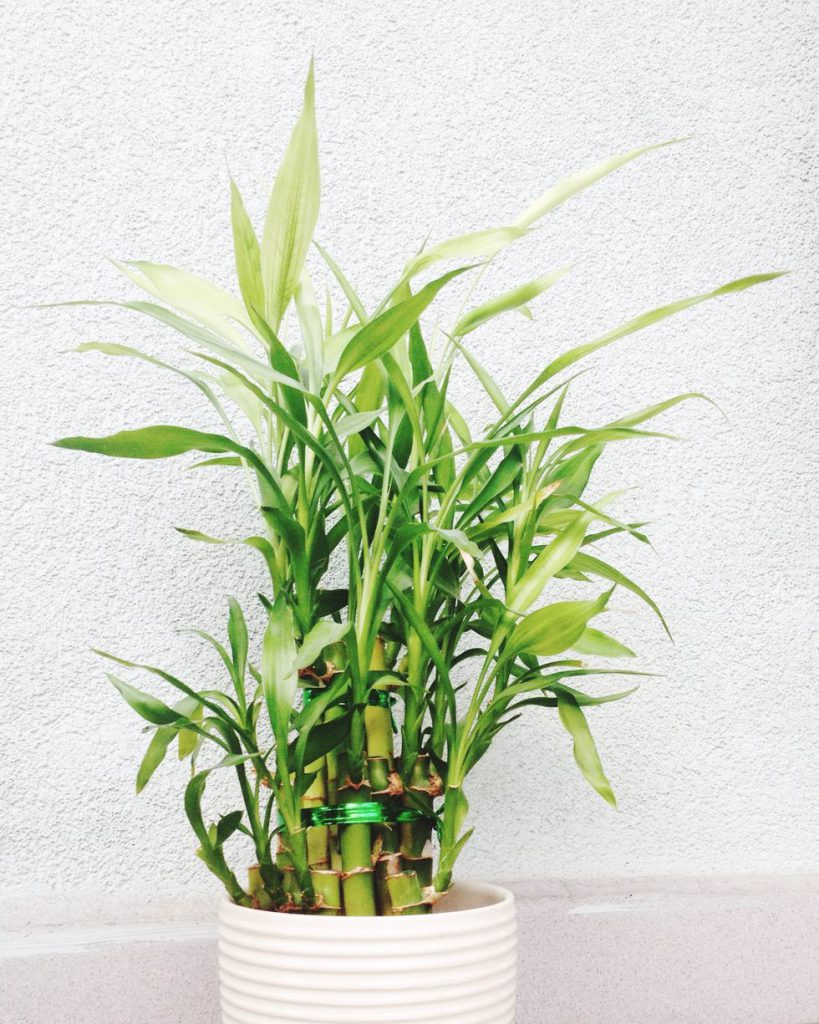 بهترین گیاهان گلدانی