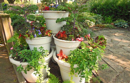 همه چیزهایی که باید درباره نگهداری گیاهان در گلدان بدانید