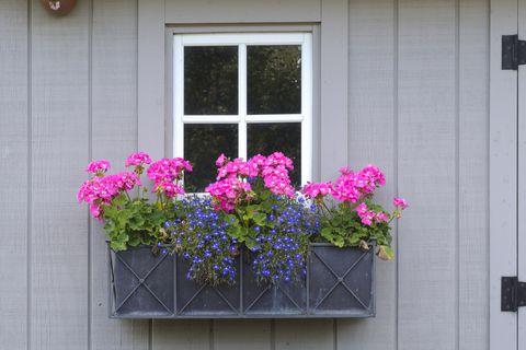 نگهداری گیاهان در گلدان