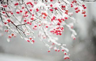 گیاهان زیبای زمستانی که در فصل سرما هم گل میدهند