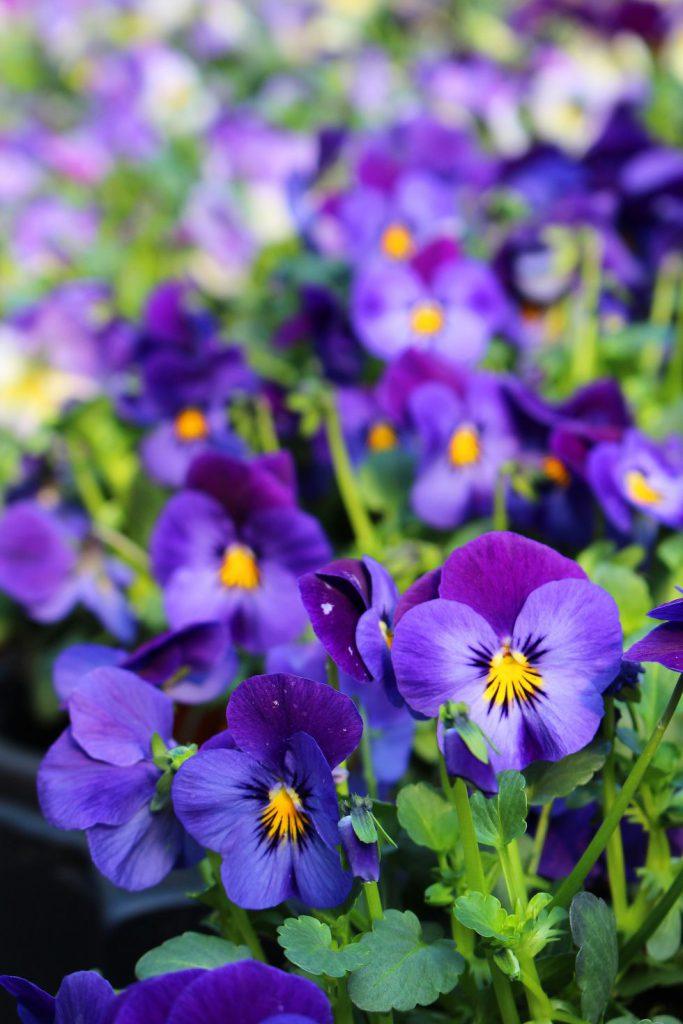 گیاهان زیبای زمستانی