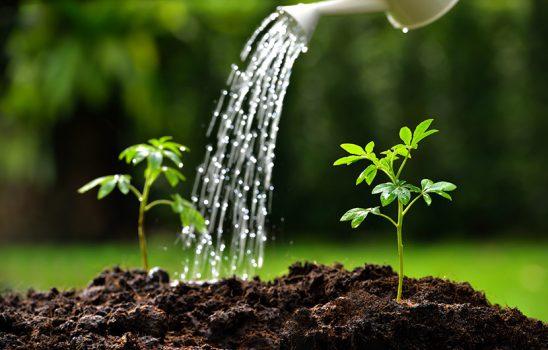 گیاهان مقاوم در برابر خشکی کدامند؟ چطور به گیاهان آب دهیم؟