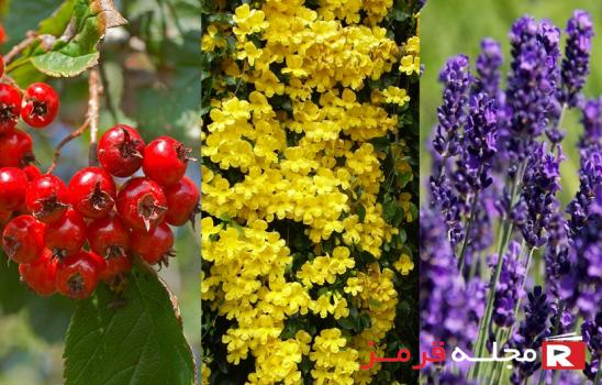 گیاهان کاهش دهنده فشار خون با ۱۰ نوع مختلف