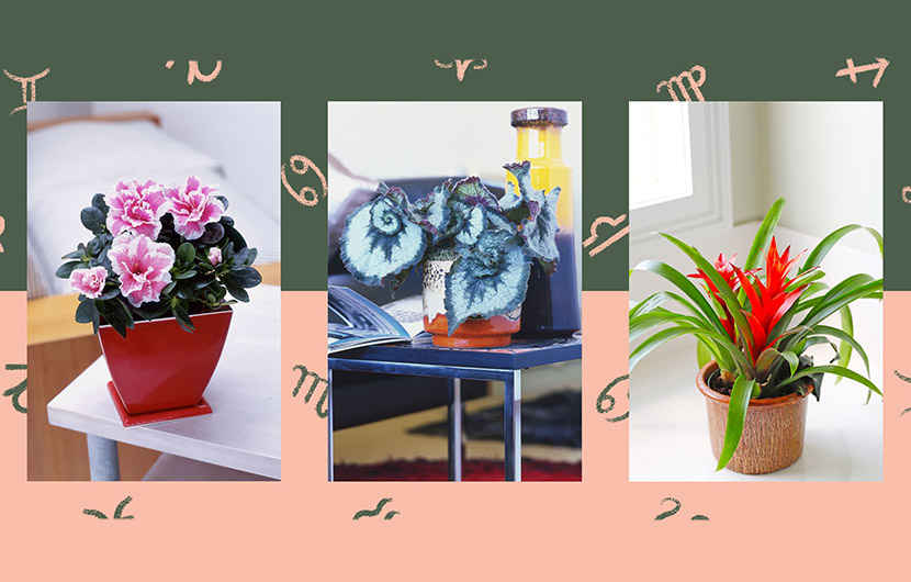 گیاه ماه تولد ،بهترین گیاه آپارتمانی برای ماه تولد شما چیست؟