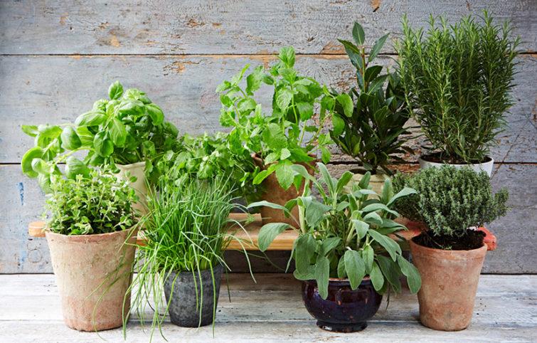 این ده سبزی خوراکی را میتوانید در طول سال در منزل بکارید