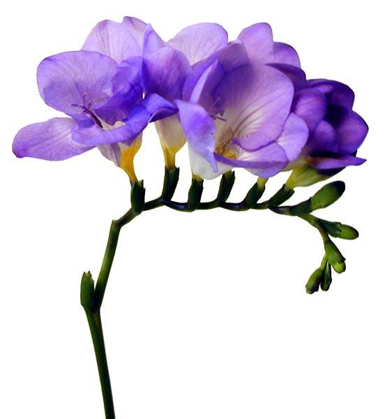 گلهای زیبا