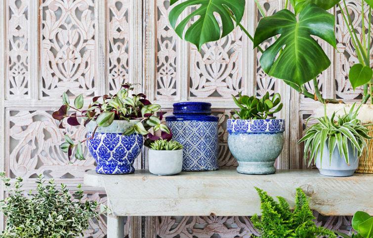 برنامه صحیح و منظم برای آب دادن به گیاهان آپارتمانی