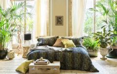 ده گیاه آپارتمانی زیبا که نگهداری از آنها بسیار ساده است