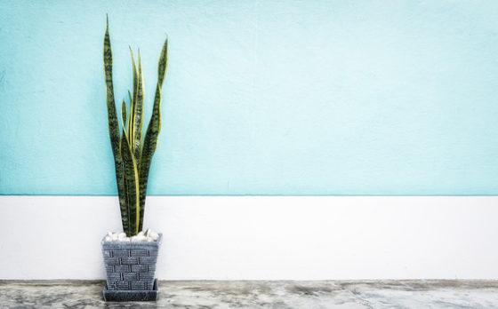 ده گیاه آپارتمانی زیبا