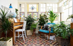 گیاهان تصفیه کننده هوا : این گیاهان هوا خانه را پاکیزه میکنند