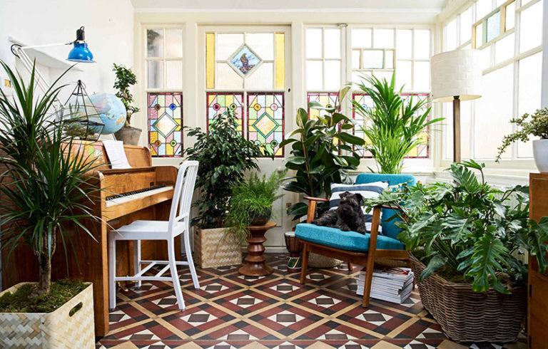 گیاهان تصفیه کننده هوا : این گیاهان هوای خانه را پاکیزه میکنند