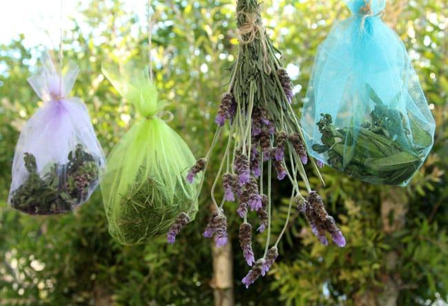 روغن گیری از گیاهان دارویی
