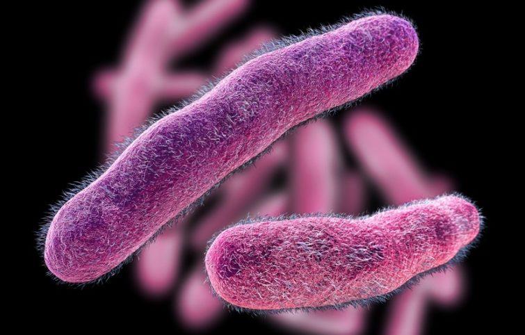 عفونت شیگلا ( شیگلوزیس) و نگاهی جامعه به این بیماری