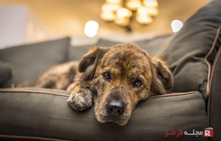 افسردگی سگ با این ۱۱ علائم خاموش شناسایی میشود