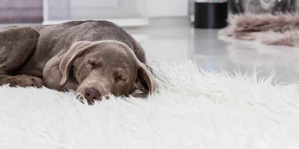 افسردگی سگ