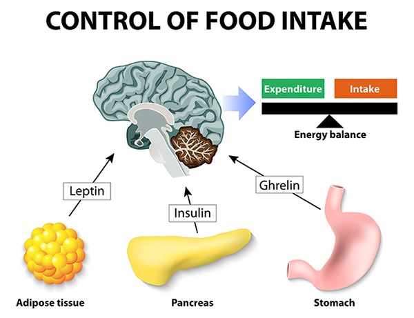 رژیم غذایی و هورمون ها