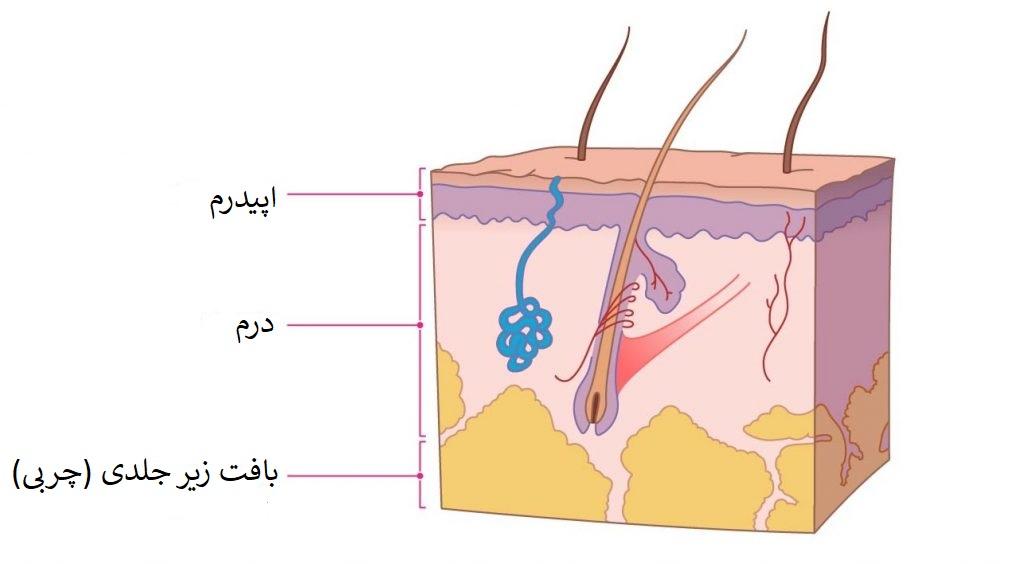 سرطان ملانوما