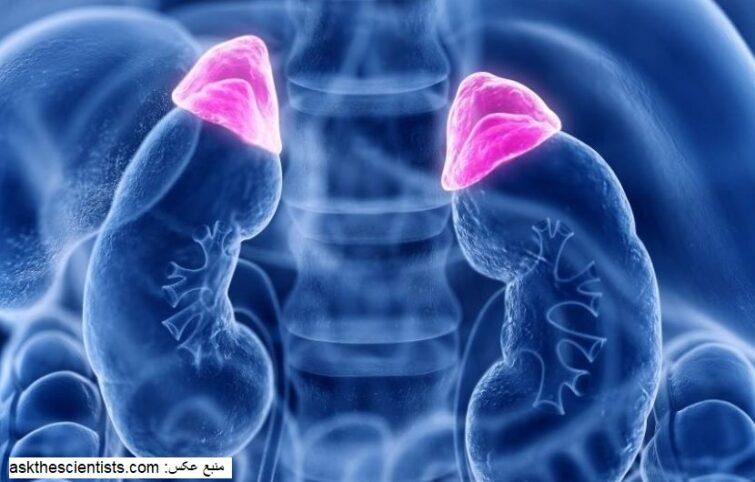 اختلال در عملکرد غدد فوق کلیوی (Adrenal Glands) با چه علائمی همراه است؟