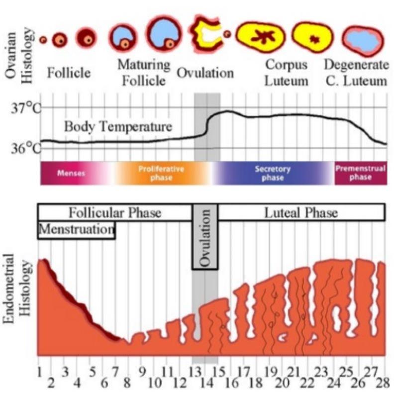 تفسیر آزمایش هورمونی